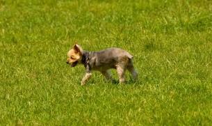 犬の熱中症の画像