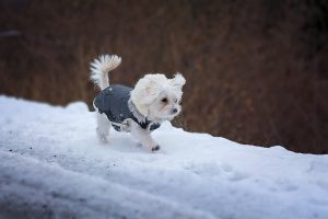 雪道を歩く犬の画像