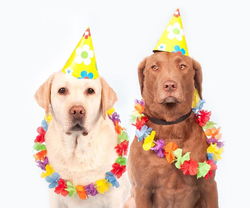 犬のお誕生日