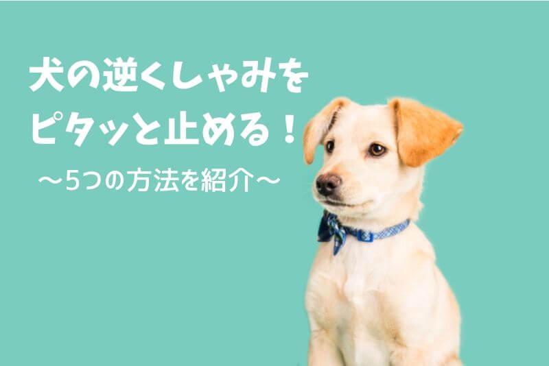 【実例解説】犬の逆くしゃみの原因とピタッと止める5つの対処法