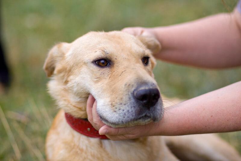顔をマッサージされる犬