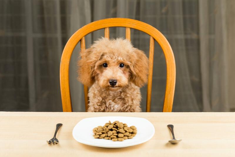 ご飯を目の前に我慢する犬