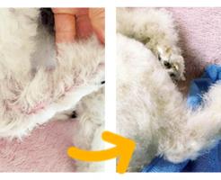犬用化粧水「アヴァンス(AVANCE)」の効果