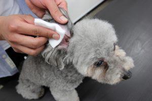 犬用化粧水「アヴァンス」の使用方法