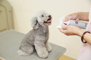 犬用化粧水アヴァンスの評判と口コミ