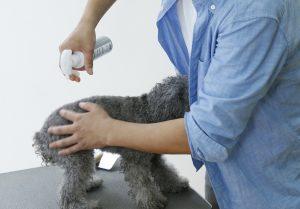 犬用化粧水