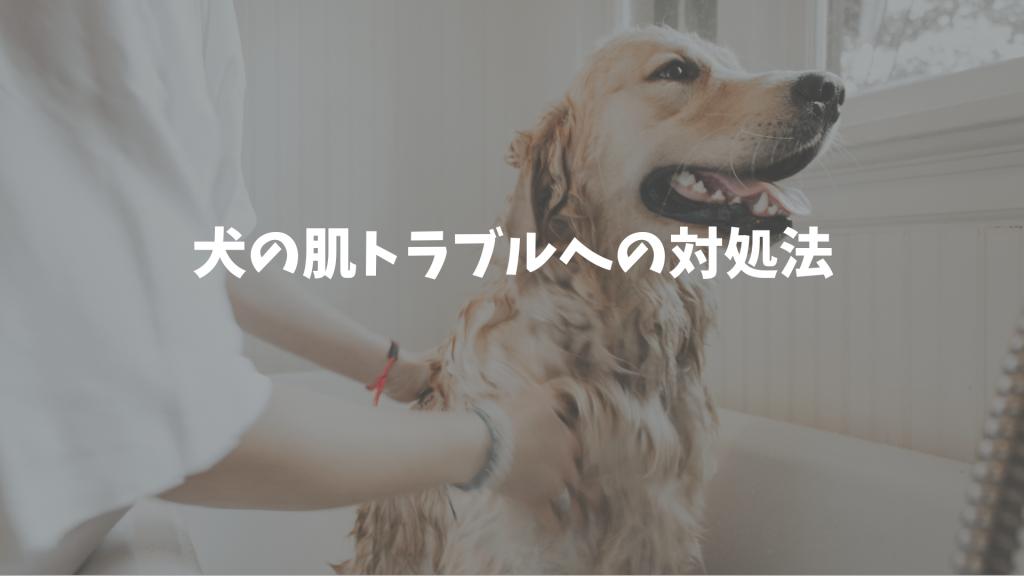 たったこれだけ!犬の肌トラブルへの対処法