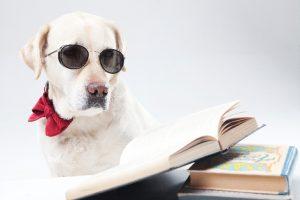 読書をする犬の画像