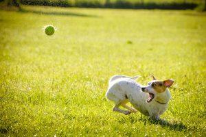 犬 ガン予防