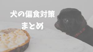 今日からできる!偏食の犬に試したい3つの治し方とおすすめドッグフード