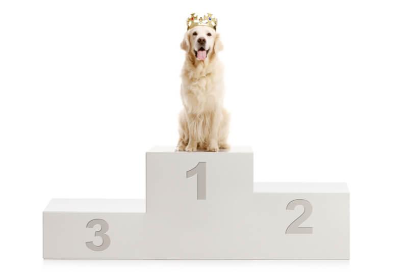 表彰台の1位に座る犬