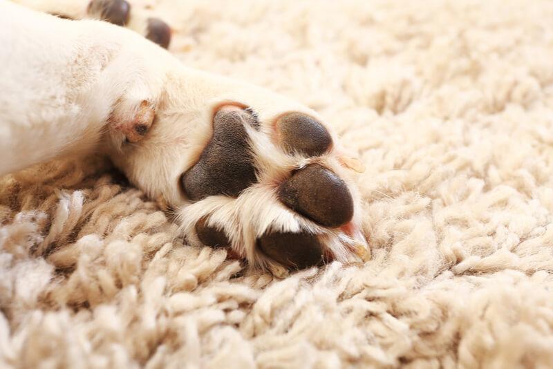 肉球、犬の足の裏
