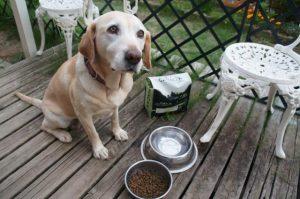 カナガンを食べようとする犬の画像