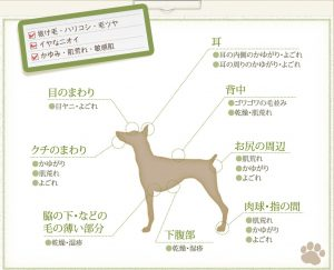 犬用化粧水「アヴァンス」