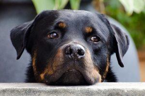 犬の軟便の食事