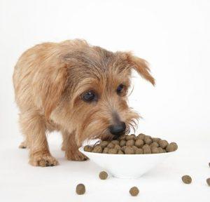 アランズナチュラルドッグフードを食べる犬の画像