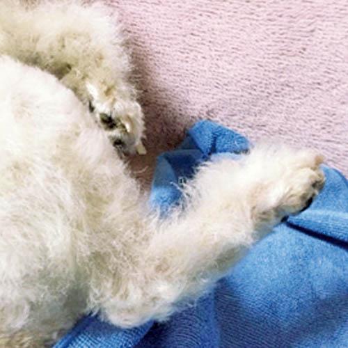 アヴァンス使用後の患部(画像)