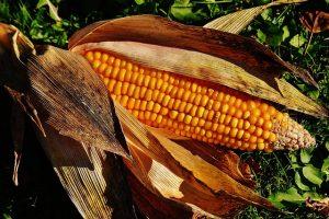 穀物のイメージ画像