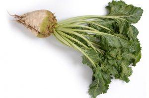 サトウダイコン(甜菜)のイメージ画像