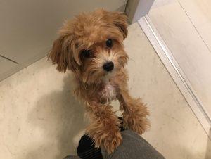 モグワンドッグフードをねだる犬の画像