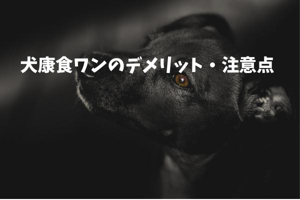 【購入前に知っておきたい】犬康食ワンのデメリット&注意点