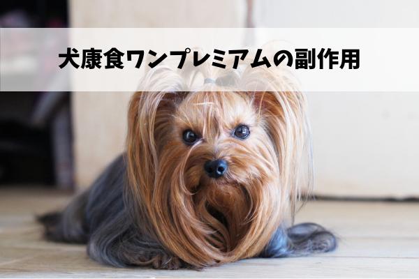 犬康食ワンプレミアムの副作用のウソホント