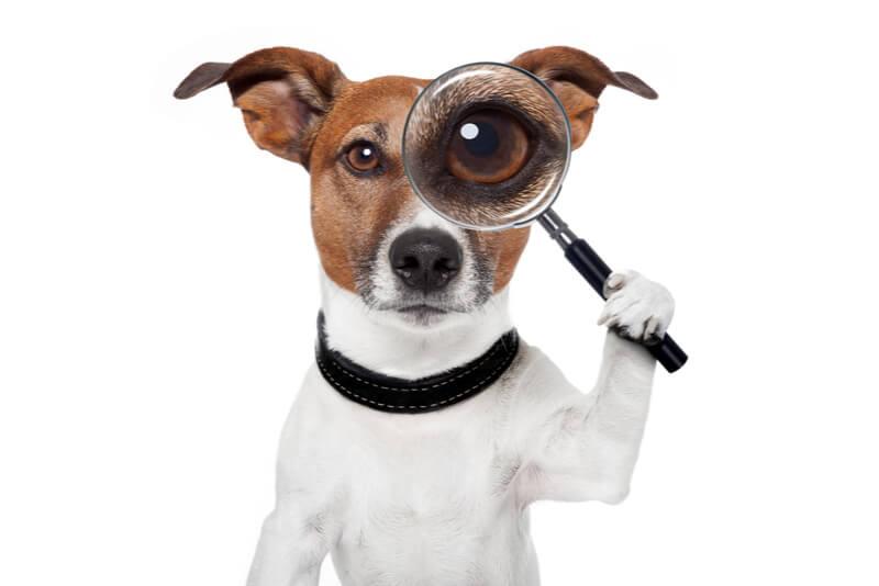 虫眼鏡でチェックする犬