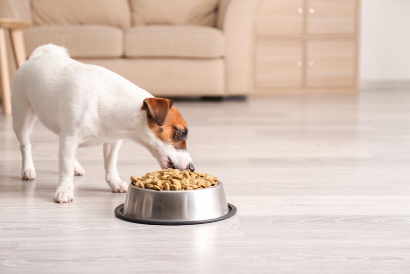 美味しそうにご飯を食べる犬