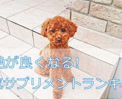 犬の毛つやが良くなるおすすめサプリメント