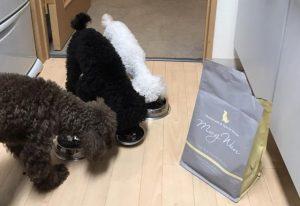 モグワンドッグフードを食べる犬の画像