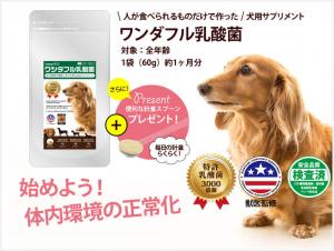 犬のアレルギー対策サプリ「ワンダフル乳酸菌」