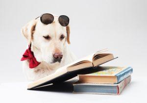読書をするラブラドールレトリバー