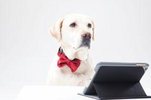 パソコンを見るラブラドールレトリバーの画像