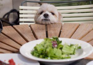 ドッグカフェで食事をする犬