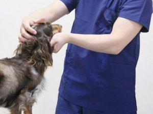 犬の食糞をやめさせたいときの食糞防止対策