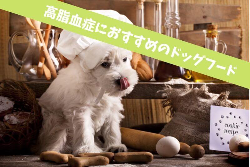 犬の高脂血症におすすめのドッグフード|毎日の食事管理はコレで解決!