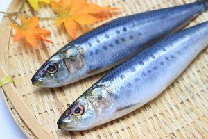 生魚の画像
