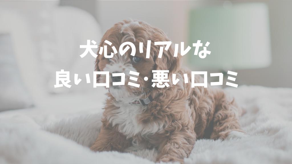 犬心ドッグフードの口コミ・評判