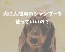 犬に人間用のシャンプーを使ってもいいの?