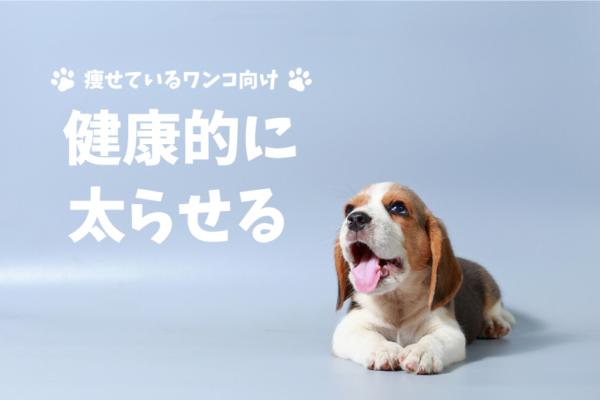 【1ヶ月で0.3kg増】痩せすぎの愛犬を健康的に太らせる方法とおすすめドッグフード