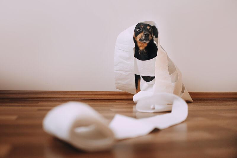 うんちをよくする犬