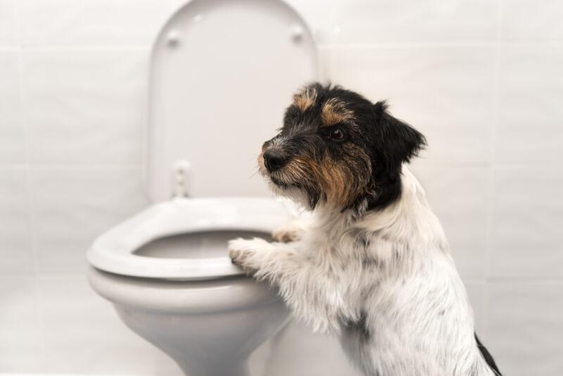 犬のウンチの回数を減らす方法