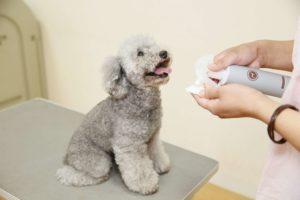 犬用化粧水アヴァンスを喜ぶ犬