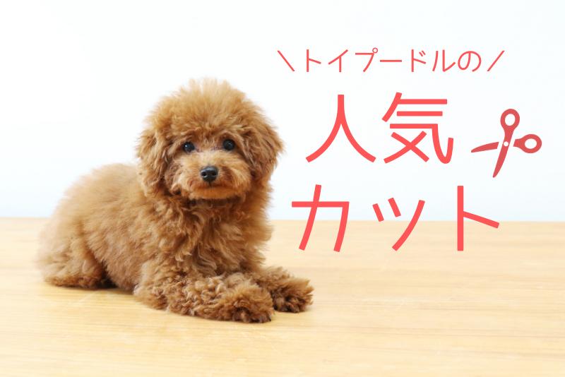 ド定番!トイプードルの人気カットスタイル10選【画像大量】