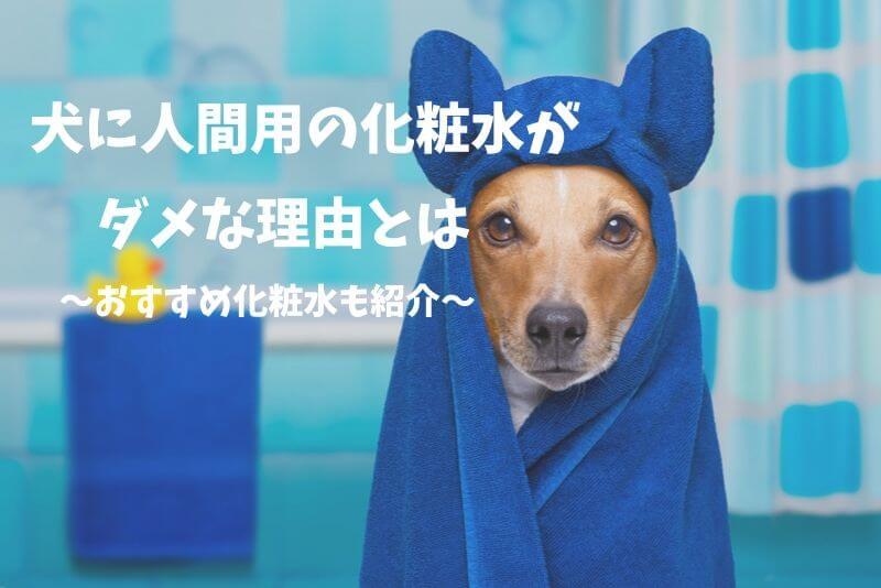 初めて買うならコレ!今人気の犬用化粧水を紹介~人間用ではダメな理由も解説~