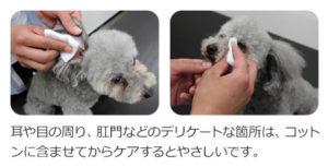 犬用化粧水アヴァンスの使い方【目と肛門】