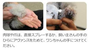 犬用化粧水アヴァンスの使い方【肉球と爪】