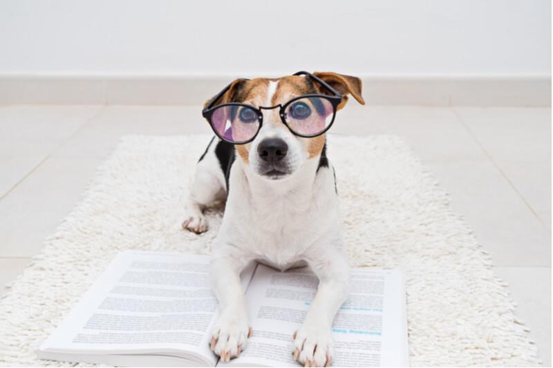 メガネをかけて本を読む犬