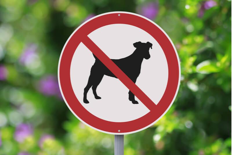 腎臓に不安のあるシニア犬には不向き