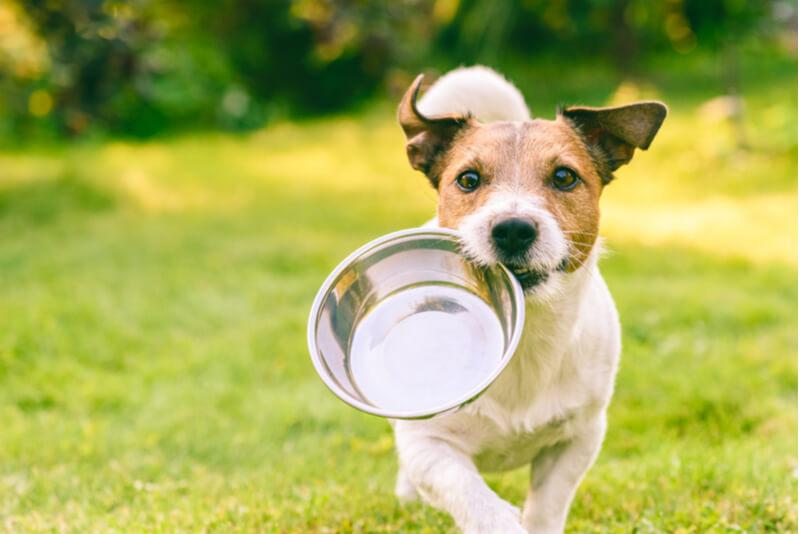 お皿をくわえて走る犬